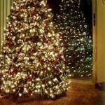 Коледни елхи за рециклиране