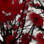 Цветове под дъжда