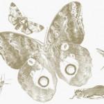 Четка с насекоми за Photoshop