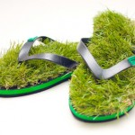 Джапанки с трева