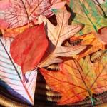 Нарисувай есенно цвете