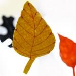 Есенни листа от филц