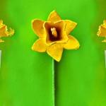 Направете си цветя от кори за яйца