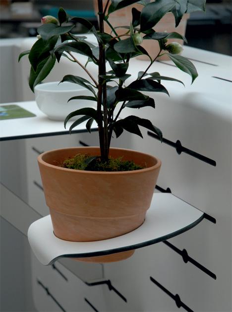 Balcony Plant 3