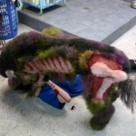 zombie-poodle-14-575×473