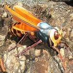 Хартиена пчела