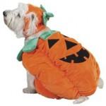 Halloween костюми за домашни любимци