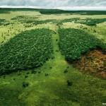 Идейни кампании на WWF – част 2