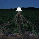 Светещите еко инсталации на фотографа Caleb Charland