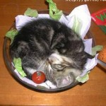 cat in a plate 1